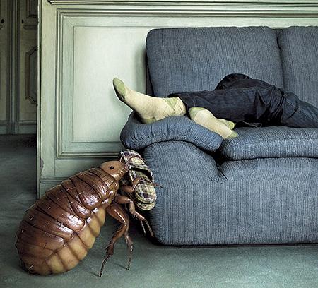 Клопы в диване