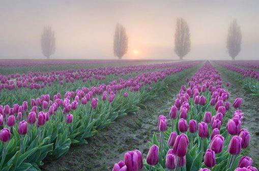 fioletovyj-divan