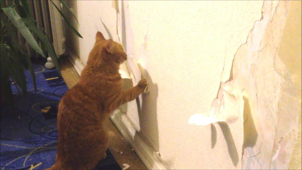 Деря обои кошки таким образом затачивают когти