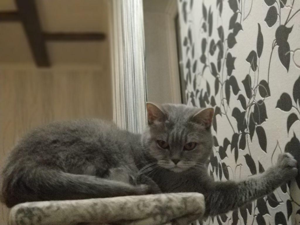 Драть обои кошки могут также от большого стресса