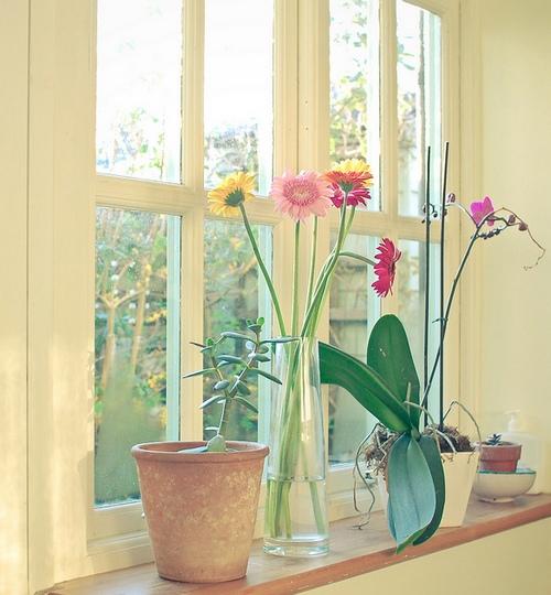 Комнатные цветы на подоконнике фото