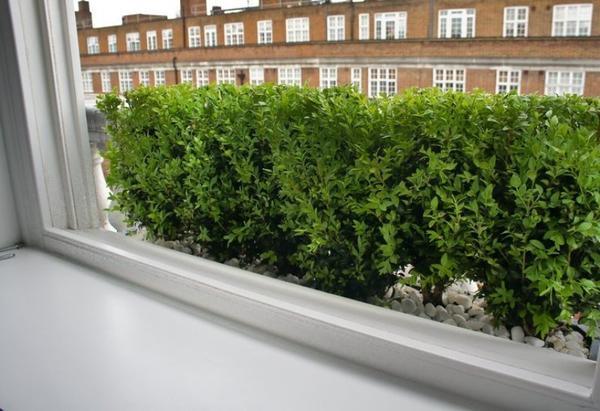Зеленый подоконник. Фото с сайта suggestkeyword.com