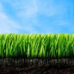 Качественный газон