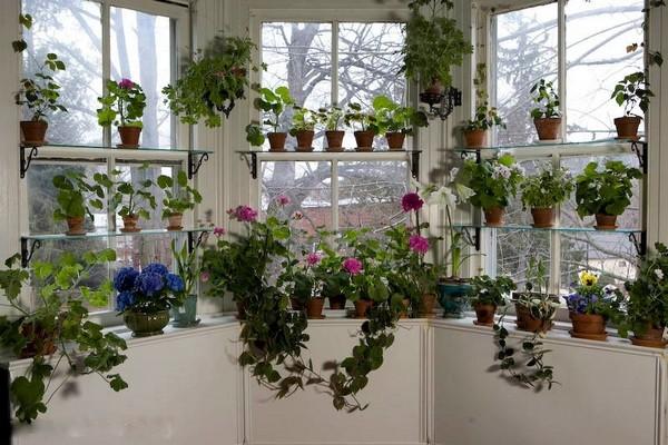Размещение цветов на балконе