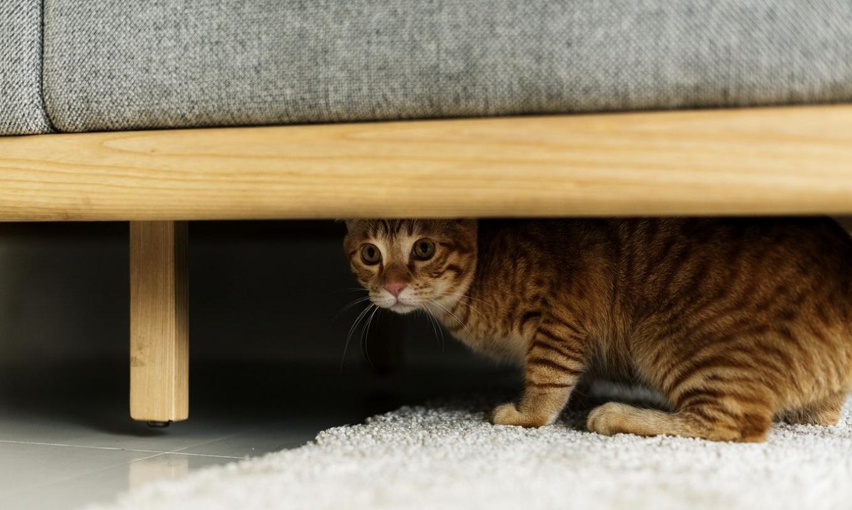 Чем вывести мочу кошки с дивана
